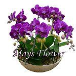 mothers-day-flower-2051
