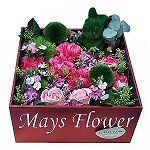 mothers-day-flower-2037