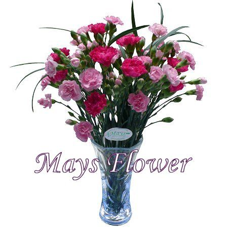 Mother's Day Flower - motherday-flower-1832